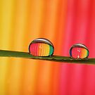 All the Colors of The rainbow....... by AroonKalandy