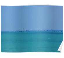 Black sea and birds Poster