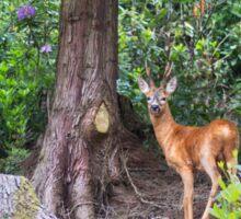 Roe Deer Sticker