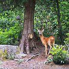 Roe Deer by Jessica Loftus