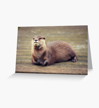 The Pondering Otter Greeting Card