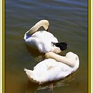 The Work of Preening Swans by Paula Tohline  Calhoun