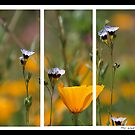 A Triptych picture by philw