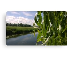 willow over river norwich Canvas Print
