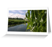 willow over river norwich Greeting Card