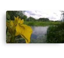 Flower over river Canvas Print