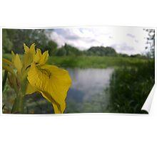 Flower over river Poster