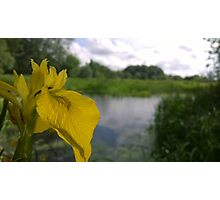 Flower over river Photographic Print