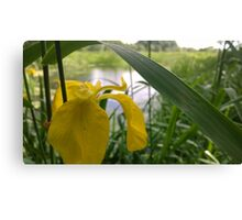 Yellow flower over river  Canvas Print