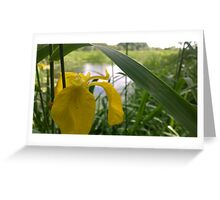 Yellow flower over river  Greeting Card