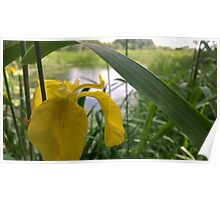 Yellow flower over river  Poster