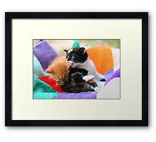 Patchwork kittens Framed Print