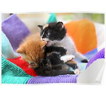 Patchwork kittens Poster