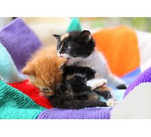 Patchwork kittens Photographic Print