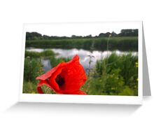 Poppy on river Greeting Card