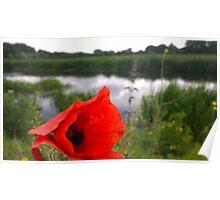 Poppy on river Poster