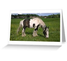 Horse in norfolk field Greeting Card