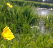 Buttercup over river in norfolk by Connor Bartlett