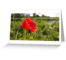 Poppy on river in norwich Greeting Card