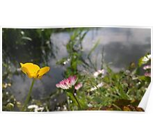 Buttercup and daisy river Poster