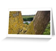 Lichen on tree near river Greeting Card
