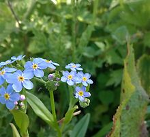 Blue flower norfolk river by Connor Bartlett