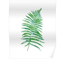 Watercolor Fern Leaves Poster