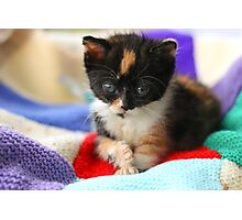 Patchwork kitten V Photographic Print