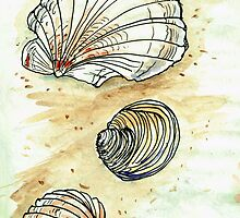 Beach Shell Study by JayBoyd