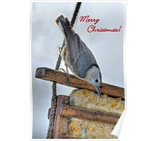 Nuthatch Christmas Card Poster