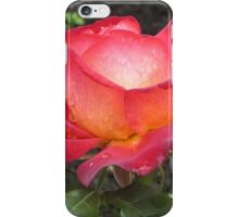 A rose named Pigalle iPhone Case/Skin