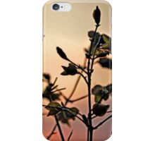 Early Spring Sunset iPhone Case/Skin