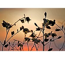 Early Spring Sunset Photographic Print