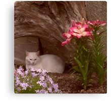 Kitty Resting Beneath Garden Driftwood Canvas Print