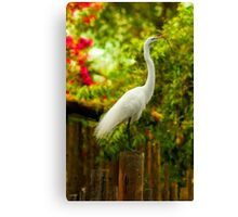 Snowy Egret on post with twig Canvas Print