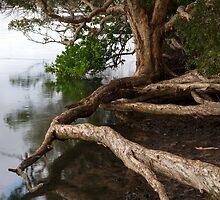 Framing Gogley's Lagoon - New South Wales by Barbara Burkhardt