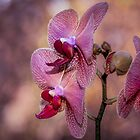 Orchid brilliance by Yvonne Jetson