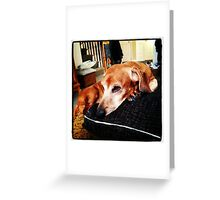 A Resting Dachshund Greeting Card