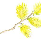 Yellow willow catkins watercolor by Sarah Trett