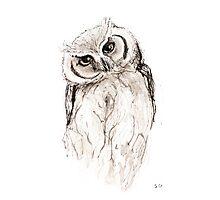 Australian Owl Photographic Print