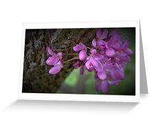 Judas Tree Flower Greeting Card