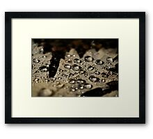 Raindrops on Leaves - part 2 Framed Print