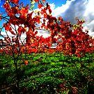autumn, eastcoast tasmania. by tim buckley | bodhiimages