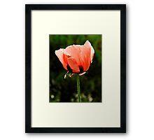 'Orlando Bloom'  Framed Print