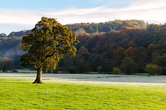Frosty Autumn Morning, Inistioge, County Kilkenny, Ireland by Andrew Jones