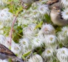 Contented sparrows Sticker