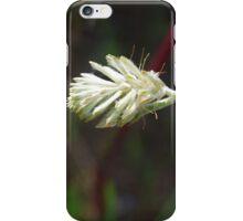 Ptilotus - long tails iPhone Case/Skin