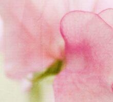 Fragile Lathyrus Beauty Sticker