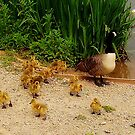 Family outing... by shelleybabe2