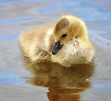 Sparkling clean adorable gosling... by Poete100